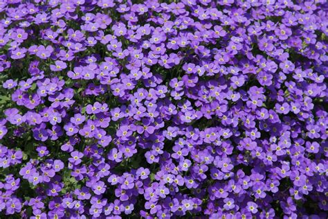 Small Purple by Free Photo Purple Flowers Small Flower Free Image On