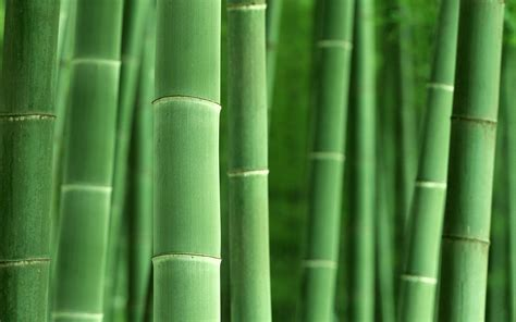 Imagenes Wallpaper Bamboo | bamboo desktop wallpapers wallpaper cave