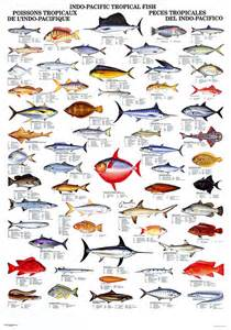 fishes and names fish photos and names fishes names 2017