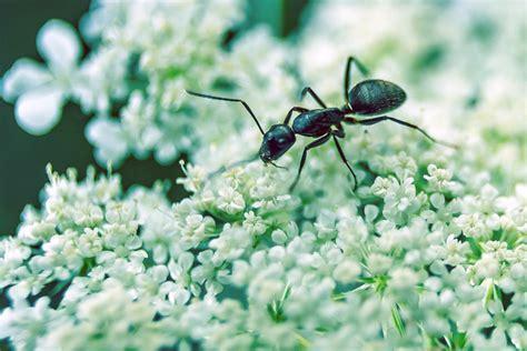 formiche in cucina rimedi rimedi naturali contro le formiche casa it