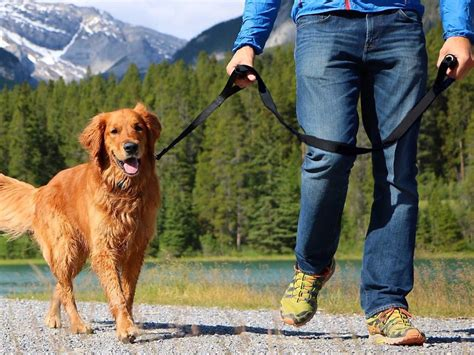 best leash for pulling the best leashes you can buy for your business insider