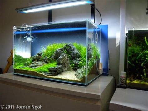 Ada Aquascaping Contest by Aga Aquascaping Contest 2011 Tank Size 60l 120l Blue