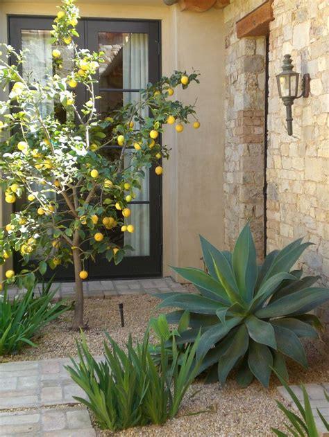 decorating  meyer lemon trees heather scott home