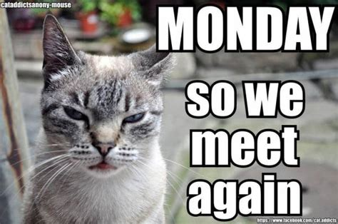 Monday Cat Meme - happy monday a story dream
