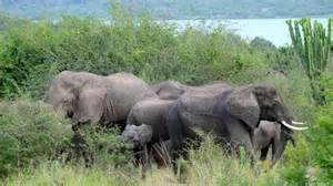 queen elizabeth national park uganda wildlife photography friday q is for queen elizabeth national