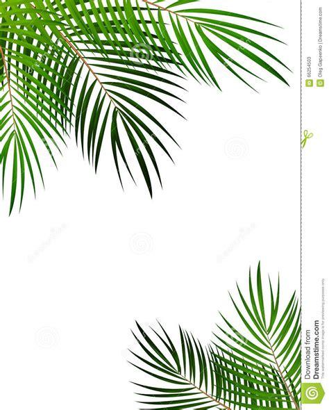 Pineapple Wallpaper by Illustration En Feuille De Palmier De Fond De Vecteur