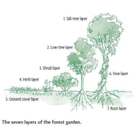 forest backyard how to design a backyard forest garden organic gardening mother earth news