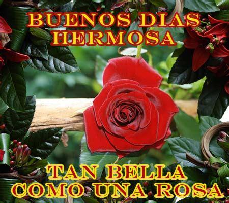 imagenes con frases de buenos dias con rosas imagenes de rosas para desear buenos dias rosas de amor
