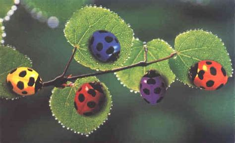 colors of ladybugs ladybugs ladybugs home