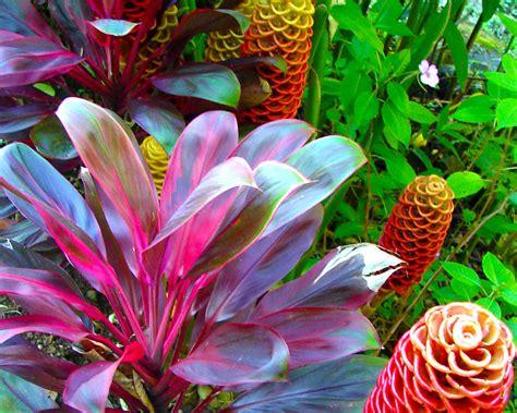hawaiian tropical plants bing images