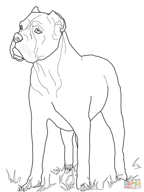 Cane Corso Coloring Page Free Printable Coloring Pages Printable Coloring Pages Canes