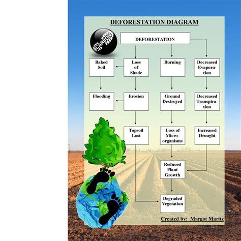 deforestation diagram deforestation causes effects modern day plague