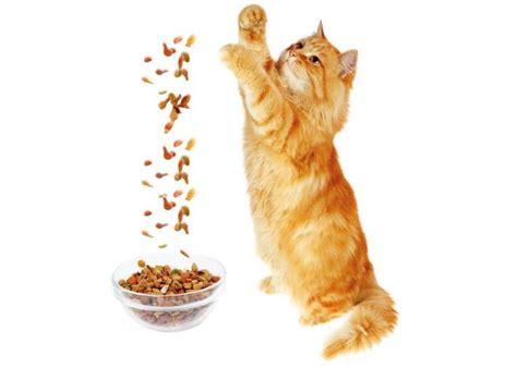 alimentazione corretta gatto alimentazione gatto sterilizzato gatti alimentazione