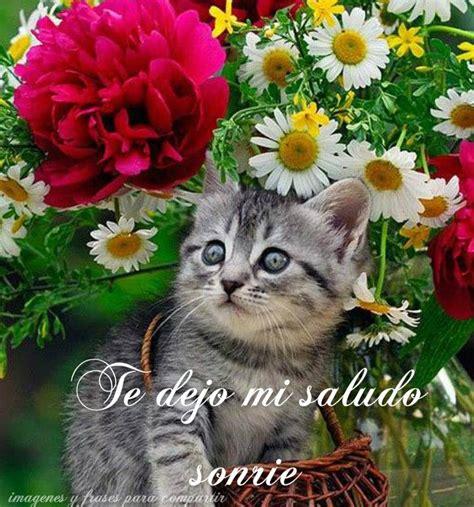 imagenes de flores y animales lindos gatitos con frases lindas de buenos dias en im 225 genes