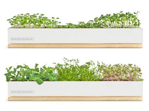indoor herb garden kits  grow herbs indoors hgtv