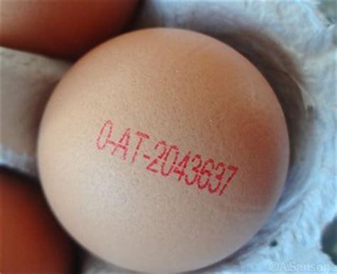 wann legen hühner das erste ei ein dutzend fakten um ostern und das ei