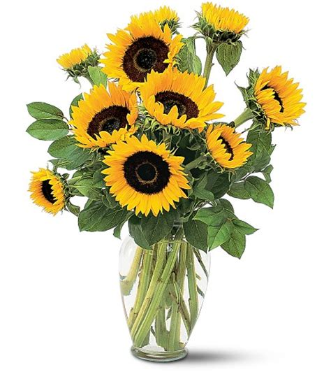 Sunflowers In Vase by San Diego Wholesale Flowers Florist Bouquets Sunflowers