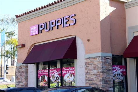 puppies store puppy mill ban approved by san marcos city council times of san diego