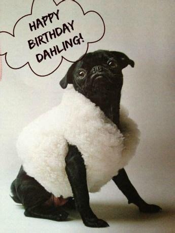 Happy Birthday Pug Meme - 536 best images about happy birthday on pinterest happy