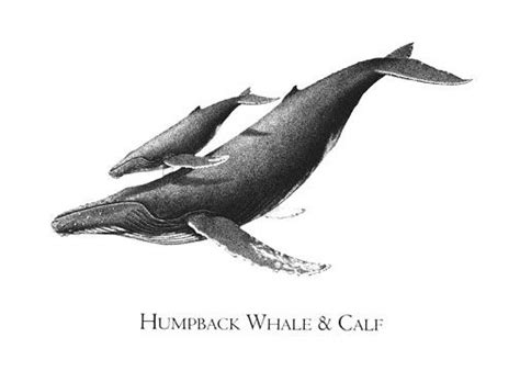 drawing humpback whale - Hledat Googlem   Tattoo ...