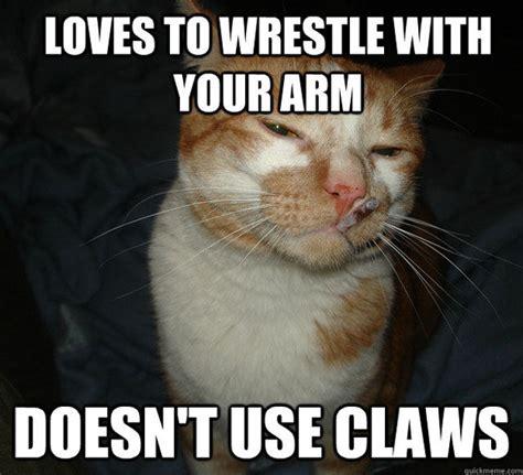 Butt Meme - no pain in the butt cat memes 20 pics izismile com