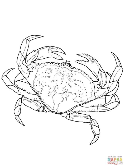 blue crab coloring page dungeness crab coloring page free printable coloring pages