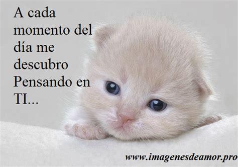 imagenes tiernas de amor para bb gatos tiernos con frases bonitas de amor im 225 genes de amor