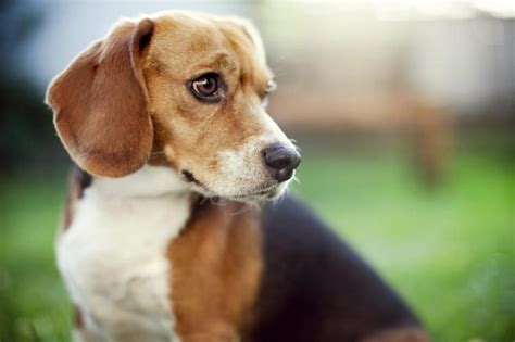 Comfort Funeral Home by Funeral Homes Increasingly Using Dogs To Comfort Mourners