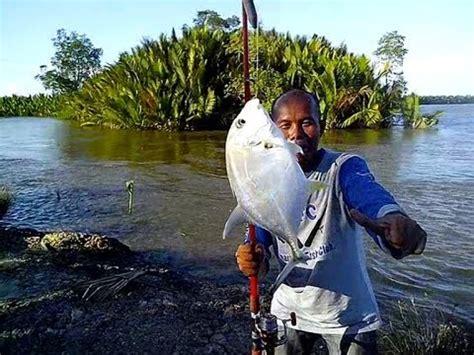 memancing bayi ikan terkulu  sungai salokpalai muara