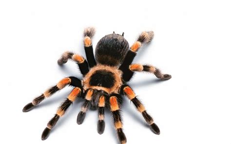 spider images theresa may s new eight legged enforcer is cronus the