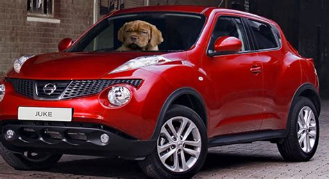 nissan car for dogs the juke of