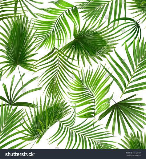 palm trees background free photo palm leaf background plant organic palm