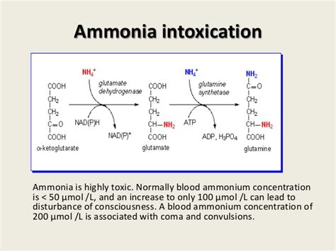 Ammonia Detox Symptoms by Amino Acid Catabolism Part 1
