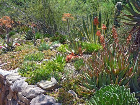 Flowering Shrubs Texas - sedum boyce thompson arboretum state park arizona