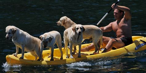 kayak for dogs kayaking with dogs 10 best kayaks for dogs best kayak