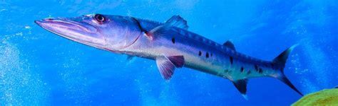 cozumel dive cozumel diving scuba diving cancun