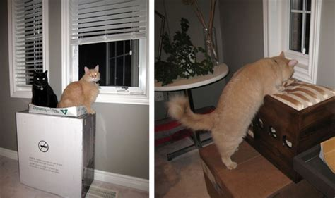 petsmart cat window seat cat window perch petsmart cat outdoor window perch the