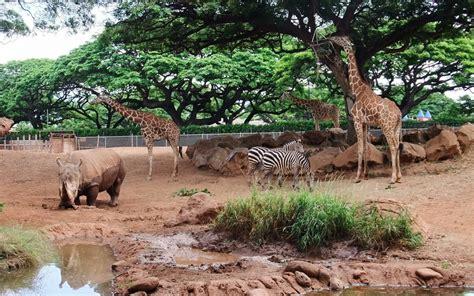 zoo background wallpaper zebra rhinoceros giraffe zoo honolulu zoo