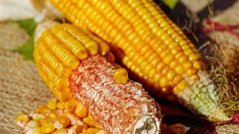 qu 233 busca el ma 237 z m 225 s all 225 de s 243 lo un alimento foto punto de maiz foto ma 237 z energ 237 a antioxidantes y sin gluten