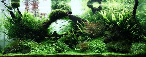 Driftwood Aquascape by Driftwood Aqua Rebell