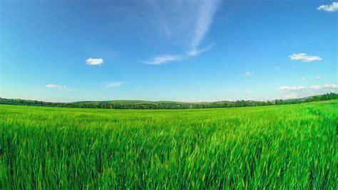 landscape  rice farm  thailand crane shot stock