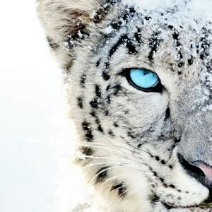 Mobile Home Decorating by White Tiger Wallpaper Android Apps On Google Play
