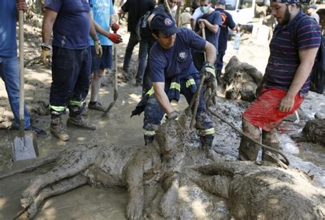 Tbilisi Search On For People Zoo Animals Missing In Georgia Flood | tbilisi search on for people zoo animals missing in