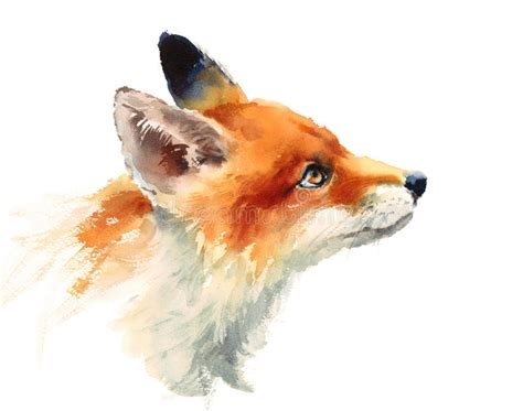 fox looking up watercolor animals illustration hand