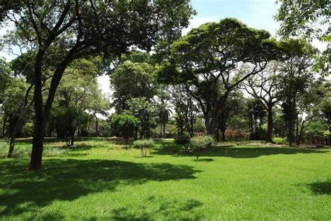 jardin con cesped mejor un c 233 sped de grama para jardines c 225 lidos y mediterr 225 neos