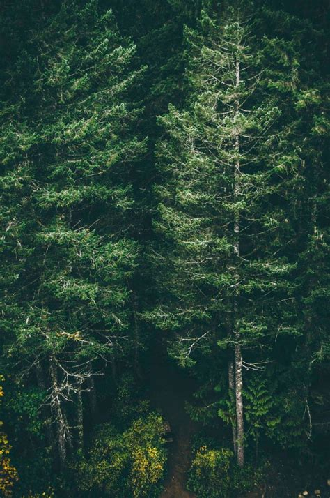 Wallpaper Iphone 6 Forest | green forest trees iphone 6 plus wallpaper background