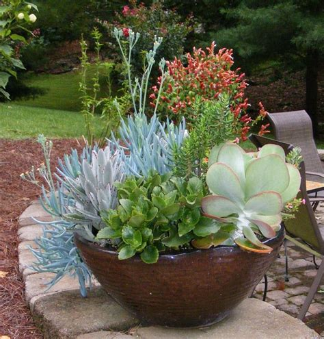large succulent planter best 25 succulent containers ideas on pinterest