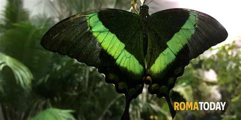 la casa delle farfalle catania la casa delle farfalle roma