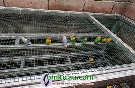 Pakan Opium Lovebird karunia bf palembang anakan lovebird trah juara