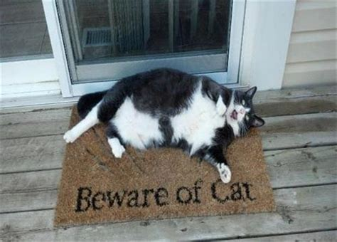 Funny Doormat Quotes Funny Animal Pictures 60 Pics